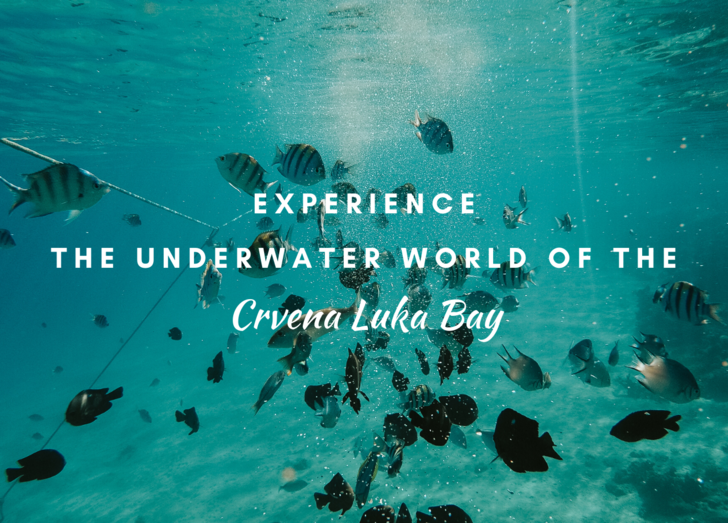 Experience the underwater world of the Crvena Luka Bay